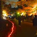 写真: 東山植物園 紅葉ライトアップ 2013 最終日 No - 31