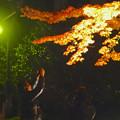 写真: 東山植物園 紅葉ライトアップ 2013 最終日 No - 34