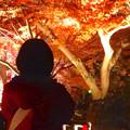 写真: 東山植物園 紅葉ライトアップ 2013 最終日 No - 38