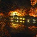 写真: 東山植物園 紅葉ライトアップ 2013 最終日 No - 43