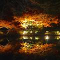 写真: 東山植物園 紅葉ライトアップ 2013 最終日 No - 45