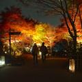 写真: 東山植物園 紅葉ライトアップ 2013 最終日 No - 48