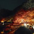 写真: 東山植物園 紅葉ライトアップ 2013 最終日 No - 52