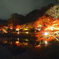 写真: 東山植物園 紅葉ライトアップ 2013 最終日 No - 51
