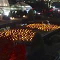 写真: スカイビュートレイン「植物園駅」から見た、ライトアップされたフラワーステージ - 2