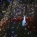 写真: ノリタケの森のクリスマスイルミネーション 2013 No - 30:ツリーの中のトナカイ