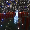 写真: ノリタケの森のクリスマスイルミネーション 2013 No - 31:ツリーの中のトナカイ
