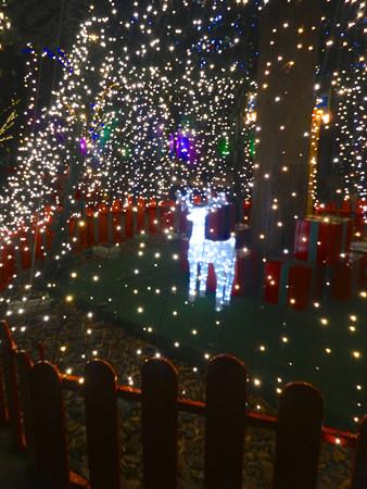 ノリタケの森のクリスマスイルミネーション 2013 No - 32:ツリーの中のトナカイ