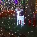 写真: ノリタケの森のクリスマスイルミネーション 2013 No - 33:ツリーの中のトナカイ