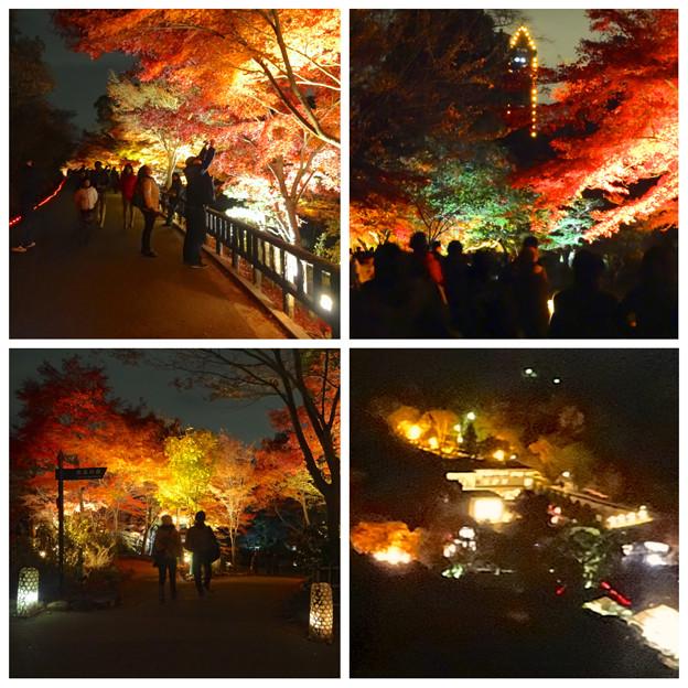 写真: 東山動植物園「紅葉ライトアップ」:まとめ - 2