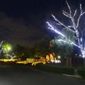 写真: ガーデンふ頭臨港緑園のクリスマスイルミネーション 2013 No - 1