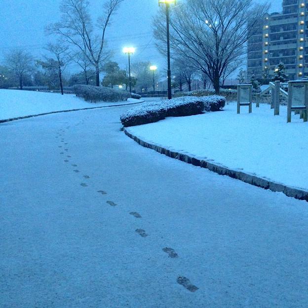 薄っすらと道路に積もった雪、そして足跡 - 08