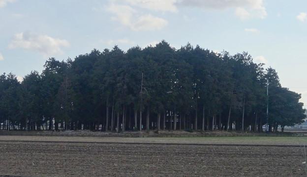 田んぼの中にポツンと浮かぶ、青塚前神明社 - 2