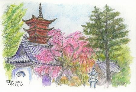 20130520宮島のしだれ桜
