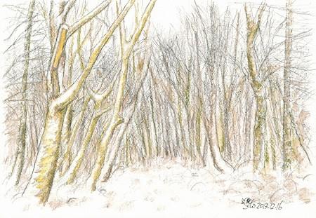 20131216樹林帯(雪)