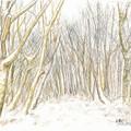 Photos: 20131216樹林帯(雪)