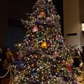 Photos: クリスマス・イルミ2013_11