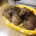 Photos: 可愛すぎる!(親バカです)