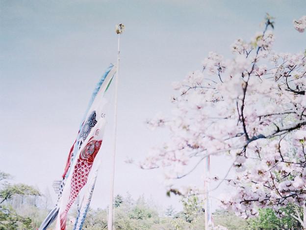 Photos: 卯月の花と皐月の恋