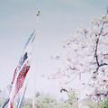 写真: 卯月の花と皐月の恋
