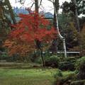 Photos: 圓藏寺本堂紅葉