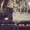 新宮熊野神社狛犬 -吽-