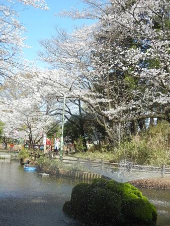 与野公園の桜 (32)