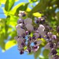 Photos: 藤公園_13-05-05_060
