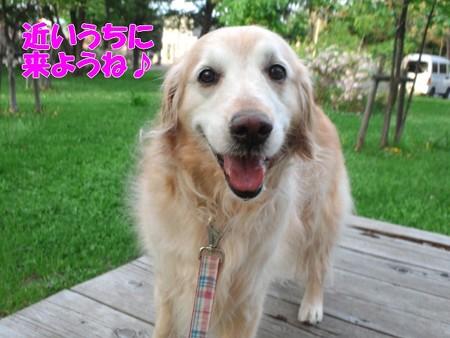 屯田西公園ドッグラン | ラ ...