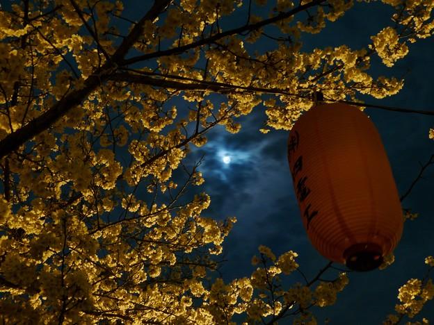 Photos: 月と桜(実験写真)