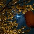 月と桜(実験写真)