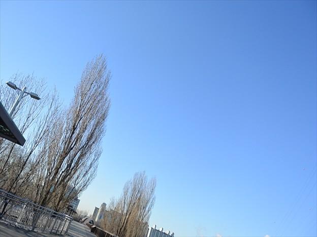写真: DSC_1242_R