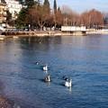 写真: 湖水(北イタリア)