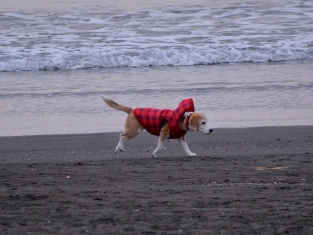 お散歩ワンコ@湘南・鵠沼海岸 #湘南 #藤沢 #海 #波 surfing #wave #mysky #犬
