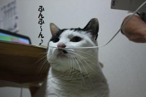 写真: ふんふ~ん