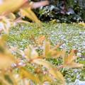 会社の庭 初夏の調和 (2)