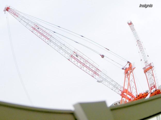 The Cranes (3)
