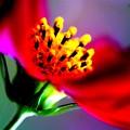 虹色............