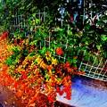 フェンスを彩る秋色............