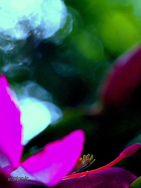 Holiday Cactus...........