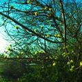 Spring breath.......