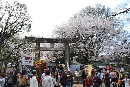 桜のもとの賑わい@上野公園 [3/28]
