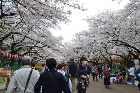 桜のトンネル@上野公園 [3/28]