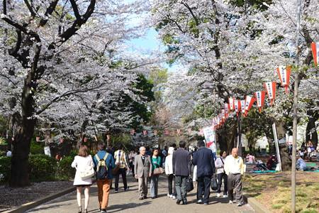 桜の道を@上野公園 [3/28]