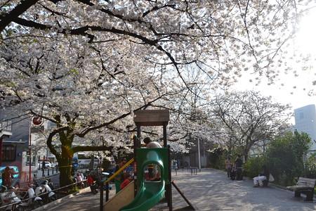 桜の下で@市ヶ谷 [3/28]