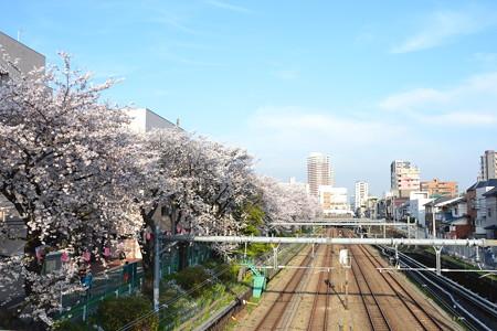 桜と線路@東中野-中野 [3/28]