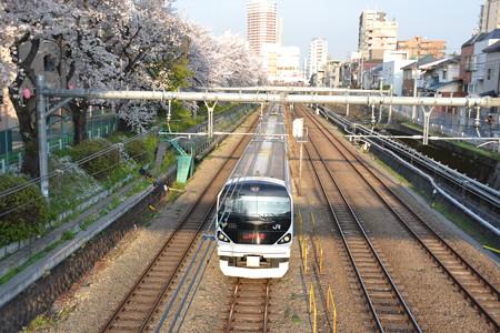 桜とE257系0番台@東中野-中野 [3/28]