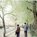 写真: わたしより若い父と母と桜