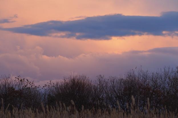 Grassy Plain at Sunset