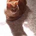 写真: 影猫